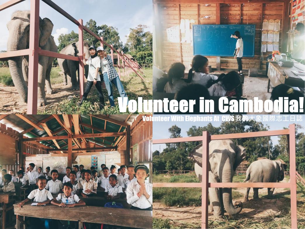[柬埔寨] 來一場不同意義旅行♥Cambodia Wildlife Sanctuary大象國際志工日誌